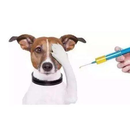 狗狗春季常见的疾病及疾病传播途径