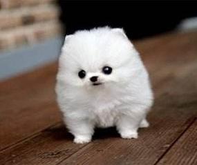 宠物用品批发网浅谈宠物美容好不好学