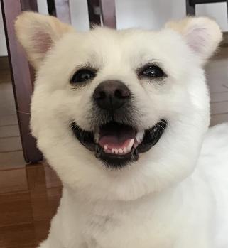 宠物用品批发网:为什么要给狗狗做牙齿清洁