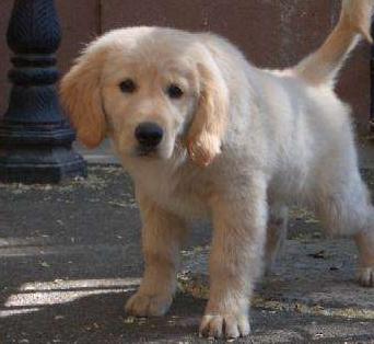 宠物用品批发网解析狗狗为什么喜欢吃屎