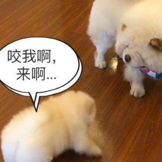 宠物用品批发网浅谈喂狗的基本指南