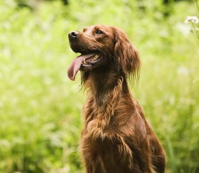 宠物用品批发网浅谈养狗狗需要考虑的问题